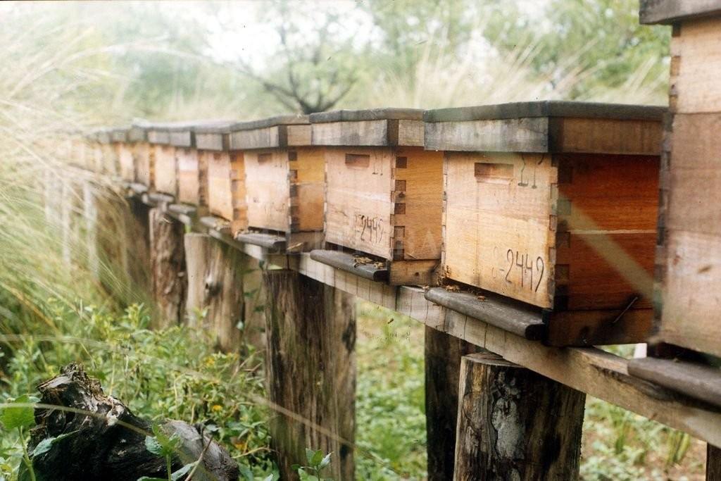 Miel orgánica: buscan aprovechar un mercado que paga hasta 30% más