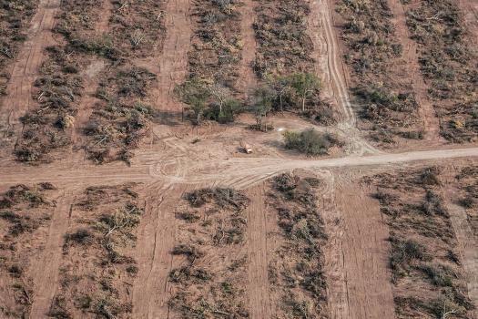 Greenpeace denunció que durante la cuarentena se deforestaron casi 50.000 hectáreas