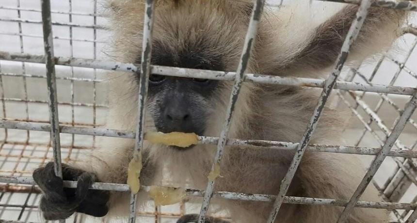 La guardia rural Los Pumas rescató más de 9.300 animales en octubre