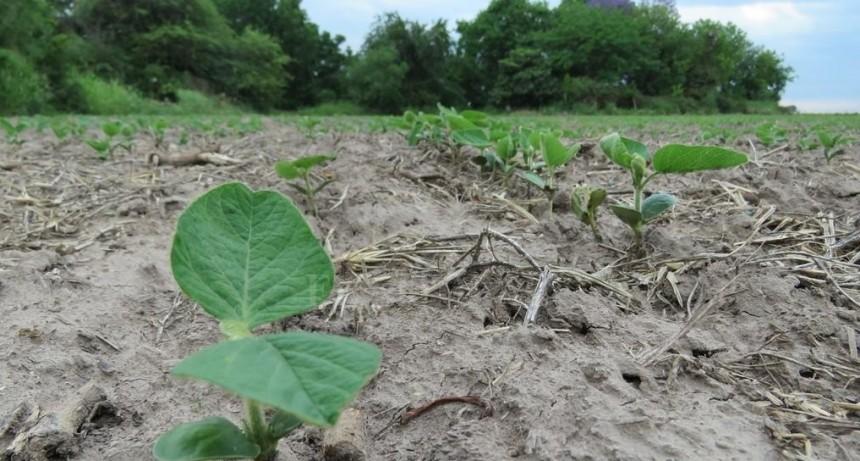 Hasta el momento, solo se sembraron 500 mil hectáreas con soja