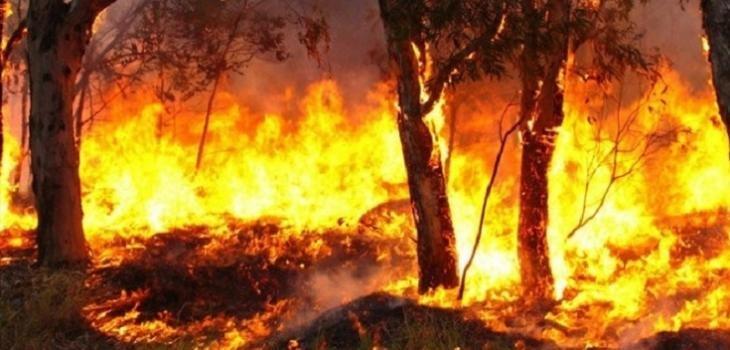 Voraz incendio en Corrientes afectó a más de 1300 hectáreas forestales