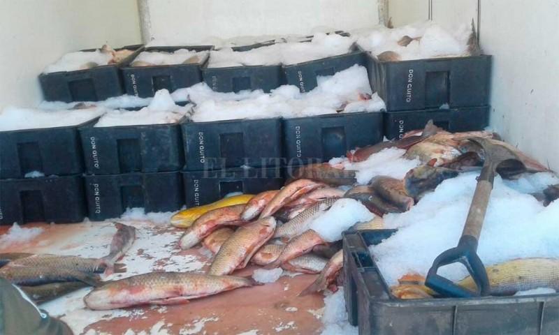 Importante decomiso de pescado en la Ruta 1