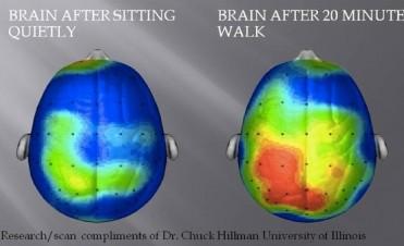 Sólo 10 minutos de ejercicio diario alcanza para tener un cerebro activo y sano