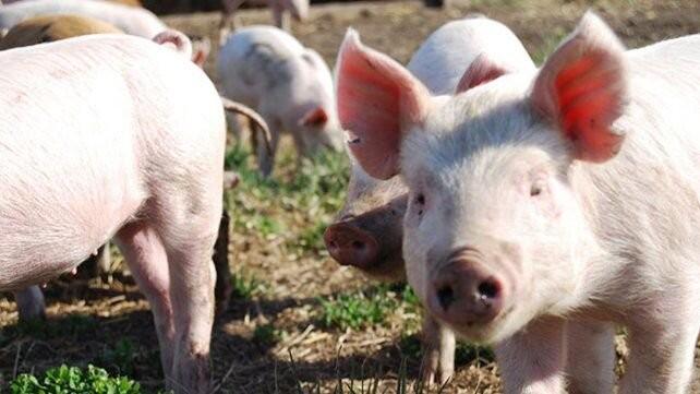 Oportunidades en la pospandemia para el mercado porcino