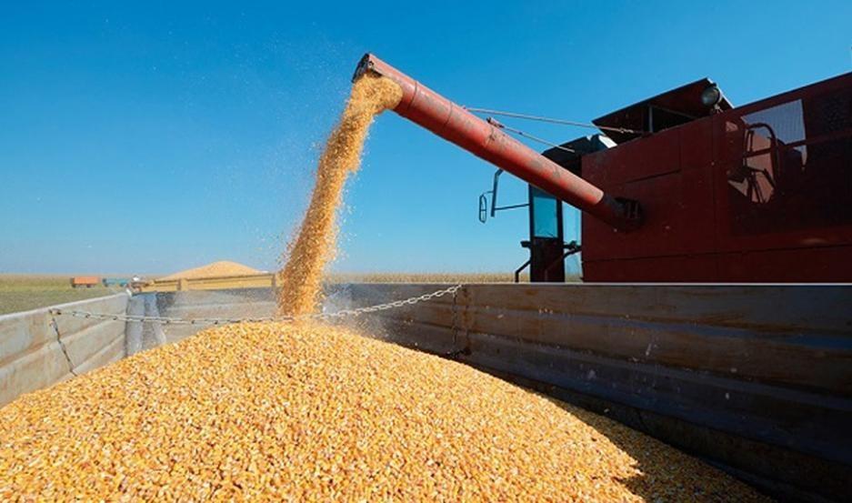 Suspenden temporalmente la exportación de maíz para asegurar abastecimiento interno