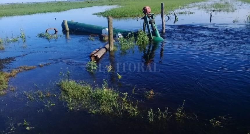 El 15% del arroz santafesino en riesgo por las lluvias