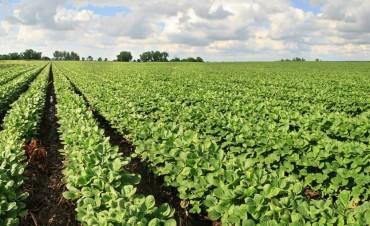 Subió la soja en Chicago por la sequía en el país