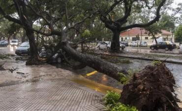 El temporal dejó 80 mm y árboles caídos