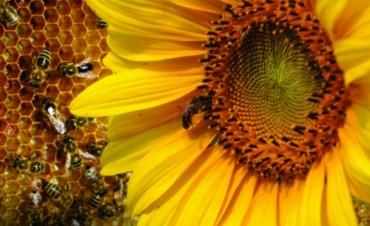 El Ministerio de la Producción realizará actividades alusivas a la Semana Nacional de la Miel