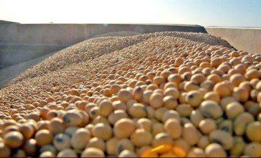 El USDA estimó una cosecha récord de soja en EE.UU. y derrumbó los precios