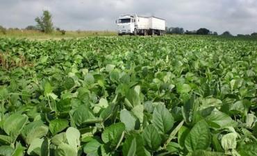 Mayores costos y bajas externas, el incierto escenario para la soja
