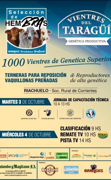 Selección de Hembras BRA y Vientres del Taragüi - 1200 madres  El 4 de octubre - Sociedad Rural de Corrientes, Riachuelo.