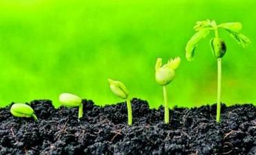 Elevaron a Etchevehere propuesta de cambios para la ley de semillas